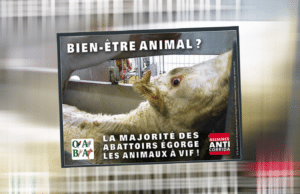 halal casher campagne abattage rituel