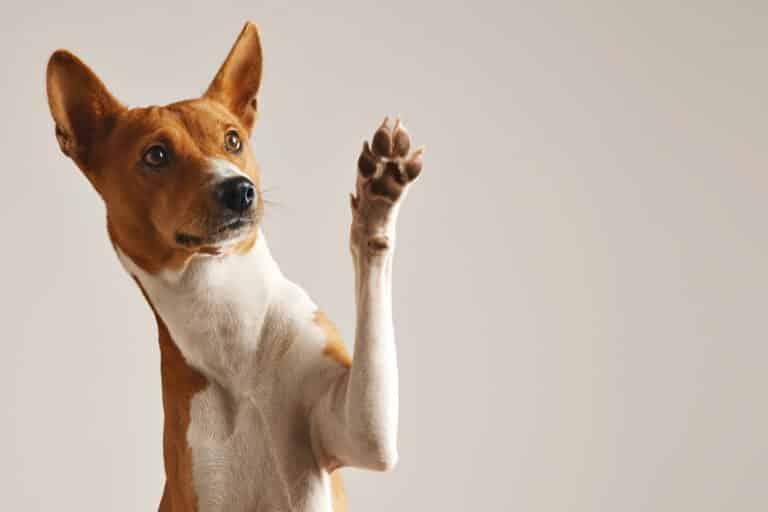 bien-être animal chien